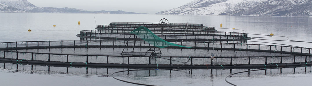 Fish Cages in Velfjorden, Bronnoy, Norway, byt Thomas Bjorkan, https://commons.wikimedia.org/wiki/File:Fish_cages.jpg, cropped
